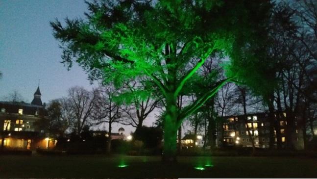 boom in het park
